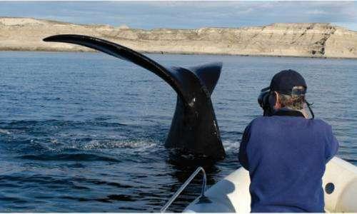 Avistaje de ballena