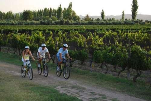 Bicicleteada entre viñedos